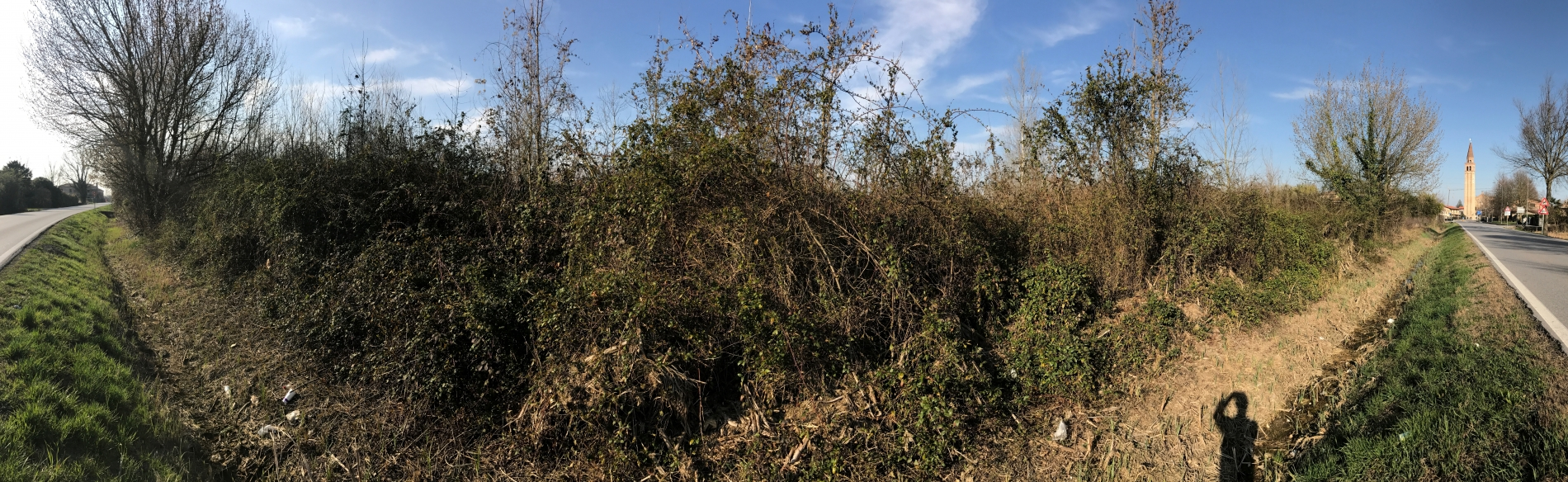 Wild Rose weed can be managed with Scrub Claw